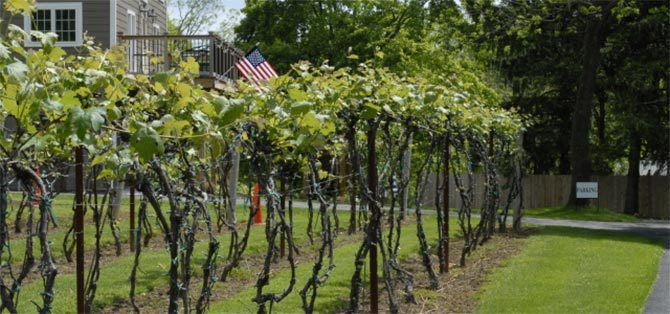 Rockin' thru the Grapevines: Stone Barn Cellars