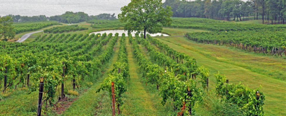 FLX vines