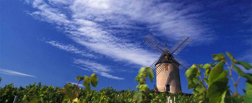 cru-beaujolais-moulin-a-vent