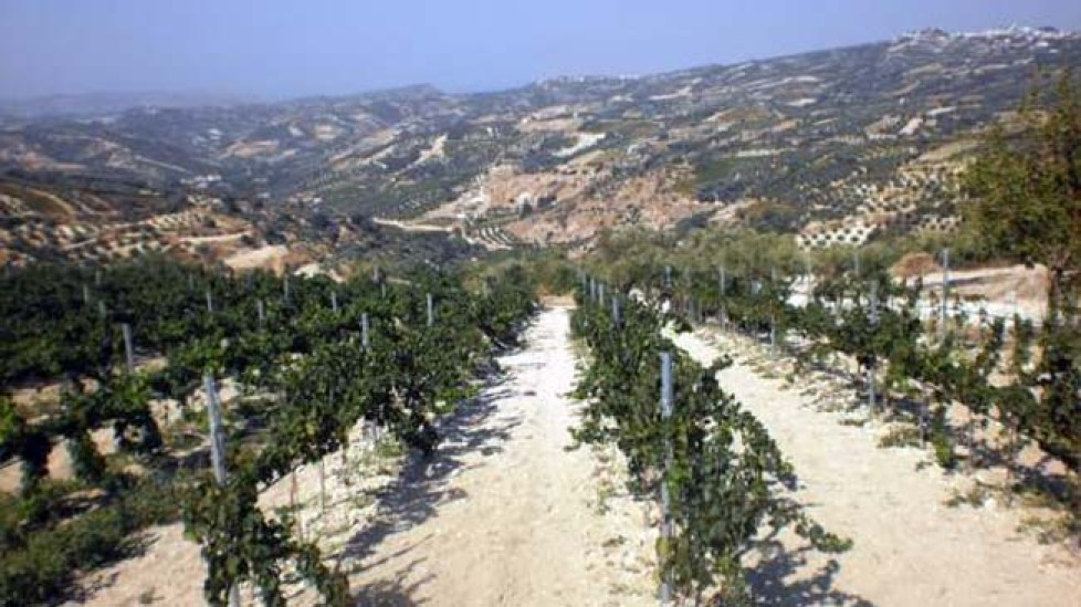 diamantakis winery