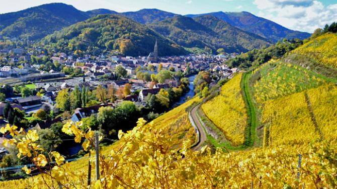 rangen-vineyard-zind-humbrecht
