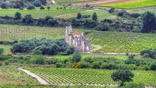 corbieres-vineyard