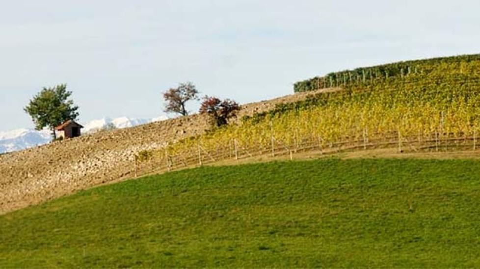 cossetti-vineyards