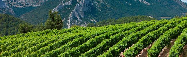 cotes-du-rhone-vineyard