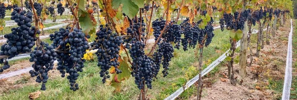 Tasting Session: Bella Terra Vineyards